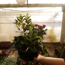 composition 24 cm 4 plantes